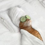 Pussy Cat getting the Spa – Funny