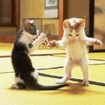 Top Funny Weird Cats Pictures