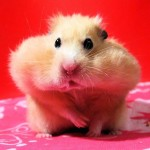 These Cute Little Hamsters Will Take Your Heart Away