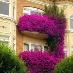 Flowers in Balcony or Balcony in Flowers